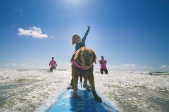 Ricochet, a Golden Retriever from San Diego, is a vetaran therapy dog celebrating over a decade as the first ever dog to surf with children with special needs and veterans with Post Traumatic Stress Disorder.