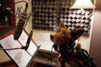 Henry, one of the five canine stars of the film, does some narration pickups in the recording studio.