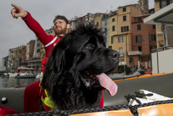 Reef, a water rescue Newfoundland with the Italian Coast Guard, shows off his superpowers on the Italian Riviera.