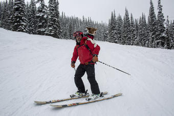 Henry, an avalanche search and rescue dog, accompanies his partner Ian Bunbury on the slopes of Whistler Mountain. The team is part of the Canadian Avalanche Rescue Dog Association and on a daily ski patrol.