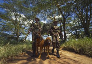Twin Bloodhound brothers, Tipper and Tony, protect endangered rhinos and elephants at the LEWA Conservancy in Kenya, Africa.