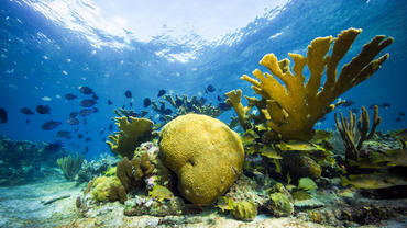 Jardines de la Reina is home to a marine reserve which is one of Cuba's largest protected national parks.