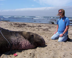 Dr. Dorian Houser working with marine mammals