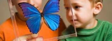 Morphos Butterfly - Nano exhibit