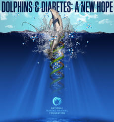 Dolphins & Diabetes
