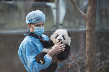 "DR. JAKE OWENS, Ph.D. (wildlife conservation biologist) holds a Giant Panda cub at Panda Valley in Dujiangyan, China as seen in the new IMAX® film, ""PANDAS,"" an IMAX Entertainment and Warner Bros. Pictures release. Photo by Drew Fellman"