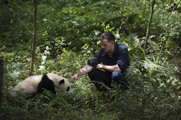 "A Giant Panda and DR. JAKE OWENS, Ph.D. (wildlife conservation biologist) at Panda Valley in Dujiangyan, China as seen in the new IMAX® film, ""PANDAS,"" an IMAX Entertainment and Warner Bros. Pictures release. Photo by Drew Fellman"