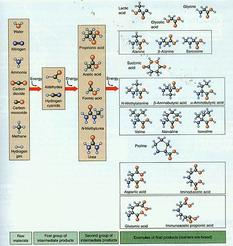 Origins of Life - Chemical Components