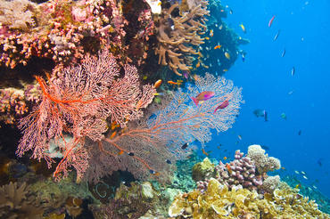 411 different known types of coral are the backbone of all life on the Great Barrier Reef.