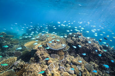 Corals are the backbone of life along the Great Barrier Reef on the Eastern coast of Australia.