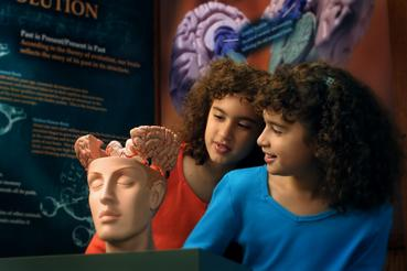 Get a hands-on look at the brain